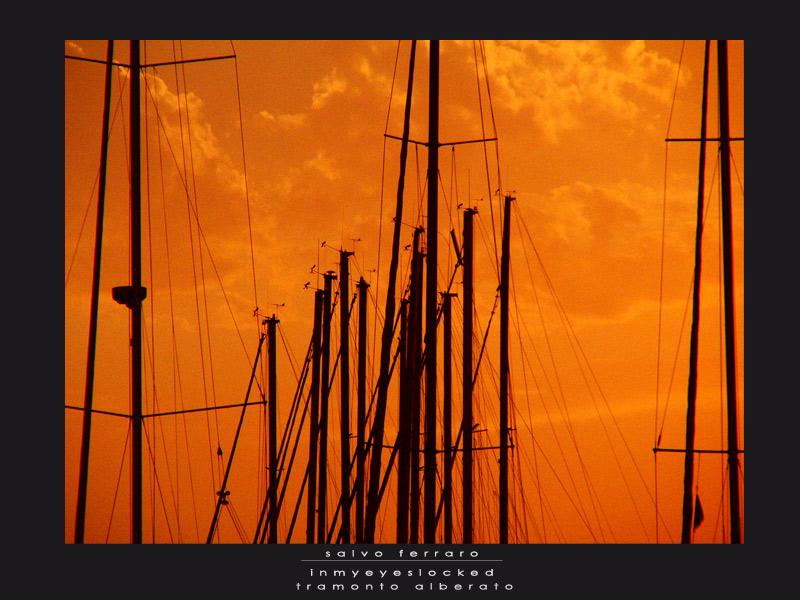 tramonto alberato